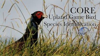 Upland Game Bird Species Identification