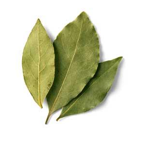 Bay Leaf Image