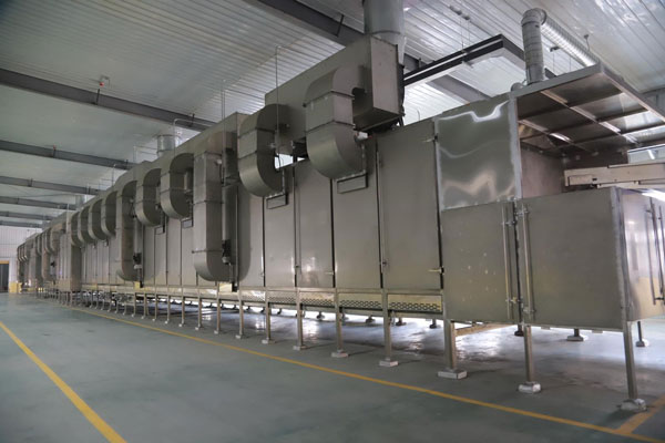 Continuous belt dryer at BCFoods dehydration facility in Hebei, China