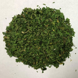 Dehydrated parsley flake before undergoing IRD treatment process