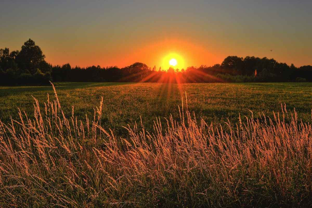 brown and green grass field during sunset