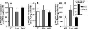 GPAT1 was not required for the incorporation of exogenous fatty acid, and β-oxidation was higher in Gpat1−/− hepatocytes. Hepatocytes from wild type, Gpat1−/− (G1−/−), or Gpat4−/− (G4−/−) mice were labeled with 500 μM [1-14C]palmitic acid for 2 h. A–C, [1-14C]palmitic acid incorporation into triacylglycerol (A), phospholipids (B), and ASM (C). Data show means ± S.E. of two experiments performed in triplicate. Inset, comparison of cell media and intracellular (IntraC) ASM. Data show means of one experiment performed in quadruplicate. JBC(2013)288, 27299-27306