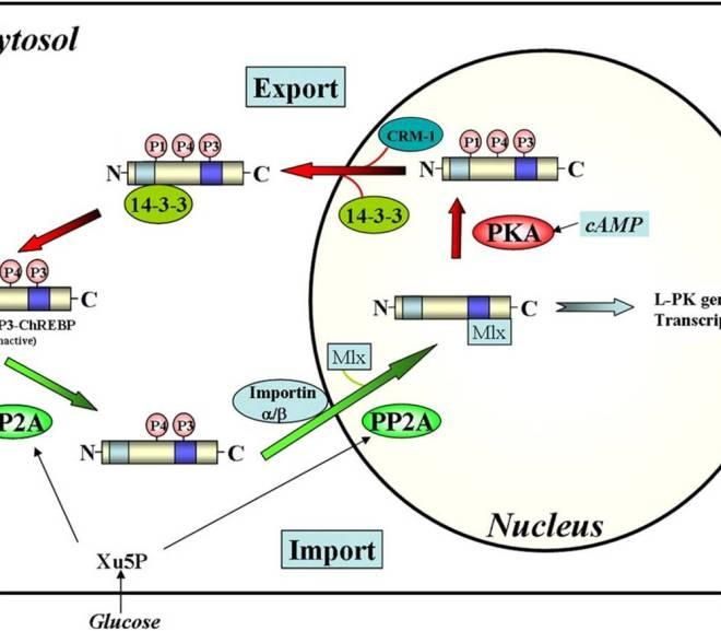 Regulating Lipogenesis during Ketosis
