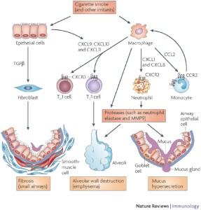 BCM441 - COPD figure 3