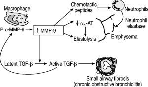 BCM441 - MMP12 figure