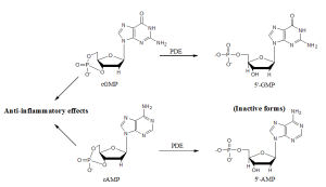 BCM441 - PDE3-4 inhibitors figure