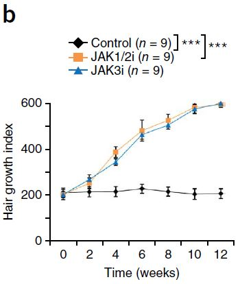 Figure 5: Treatment with JAK inhibitors has a significant effect on hair growth in C3H/HeJ mouse models after 12 weeks. (Source: Xing et. al. 2014)