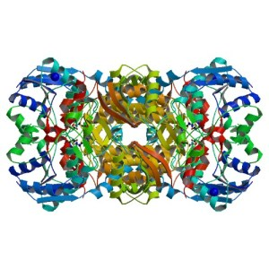 Crystal structure of human argininosuccinate synthase in complex with its reactants aspartate and citrulline (Karlberg et al. 2008)