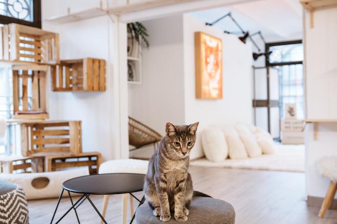 SUARA_store cat foundation barcelona
