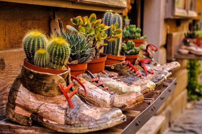 cactus plantas decorativas