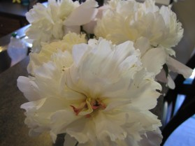 Peonies that I picked - they are so fragrant - I love them!
