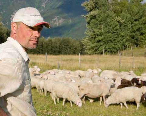 Hani Grasser looks out over his sheep at Robson Valley Sheep Farm