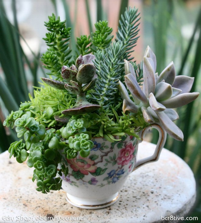 Oberrys Succulents on Etsy