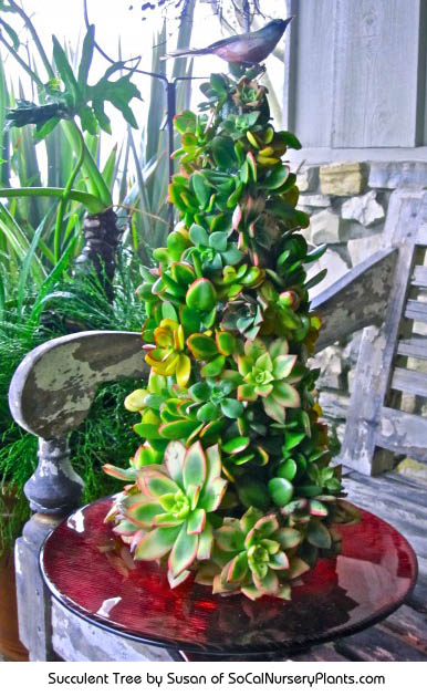 Succulent tree made by Susan of http://www.socalnurseryplants.com/nursery-information/a-very-succulent-christmas/