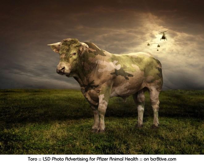 Toro :: LSD Photo Advertising for Pfizer Animal Health in Italy :: on bcr8tive.com