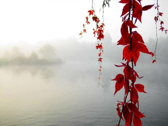 Fall Nature Photo - Red Leaves Lake Background