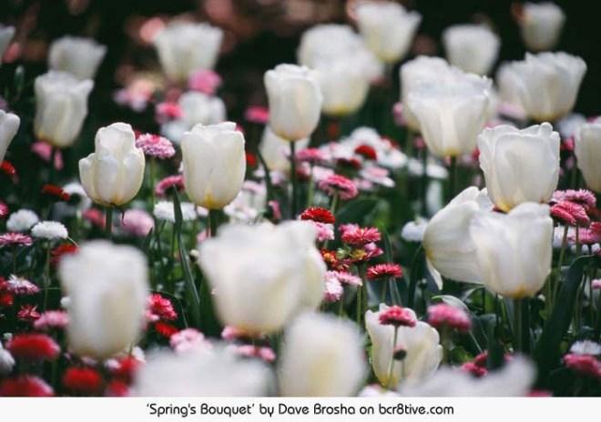 Spring's Bouquet - Dave Brosha