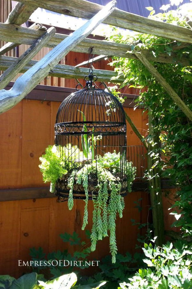 Bird Cage With Succulents by Empress of Dirt