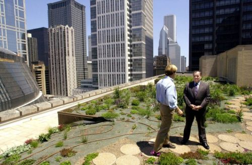 Chicago_cityhall_greenroof_920_603_80