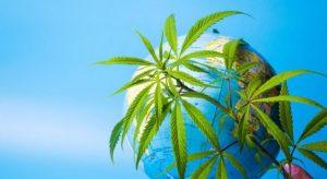Mail Order Marijuana & Weed Online Dispensary in Canada 1