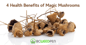 4 Health Benefits of Magic Mushrooms