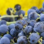 BCWineChat – Discussing the BC Grape and Wine Industry