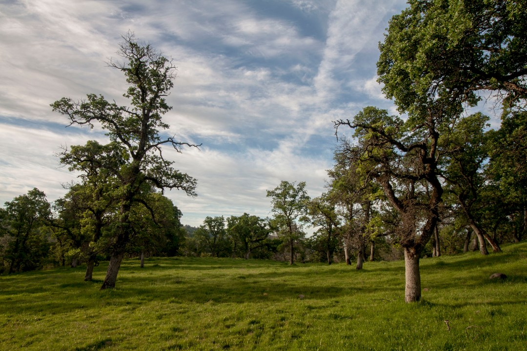 Ranch 4 - habitat-rich blue oak woodlands