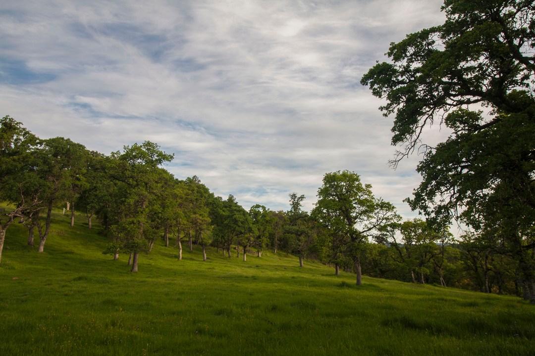 Ranch 4 - open vistas and east-facing views