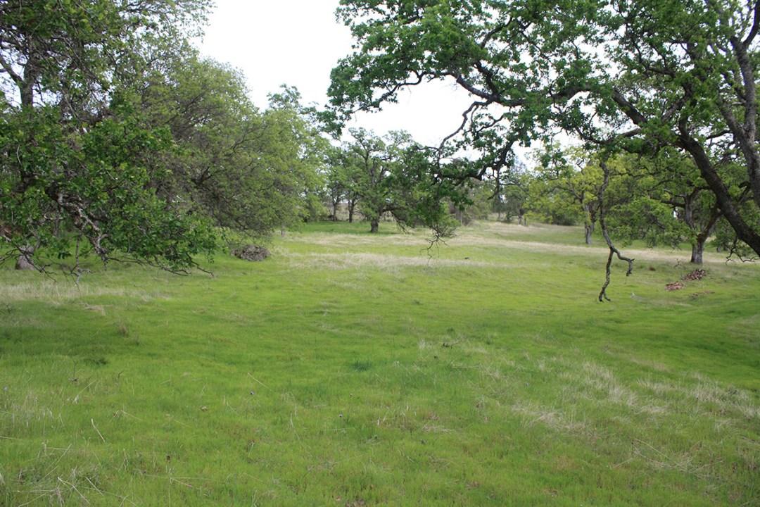 Riverview Ranch 3-13-18 (9)