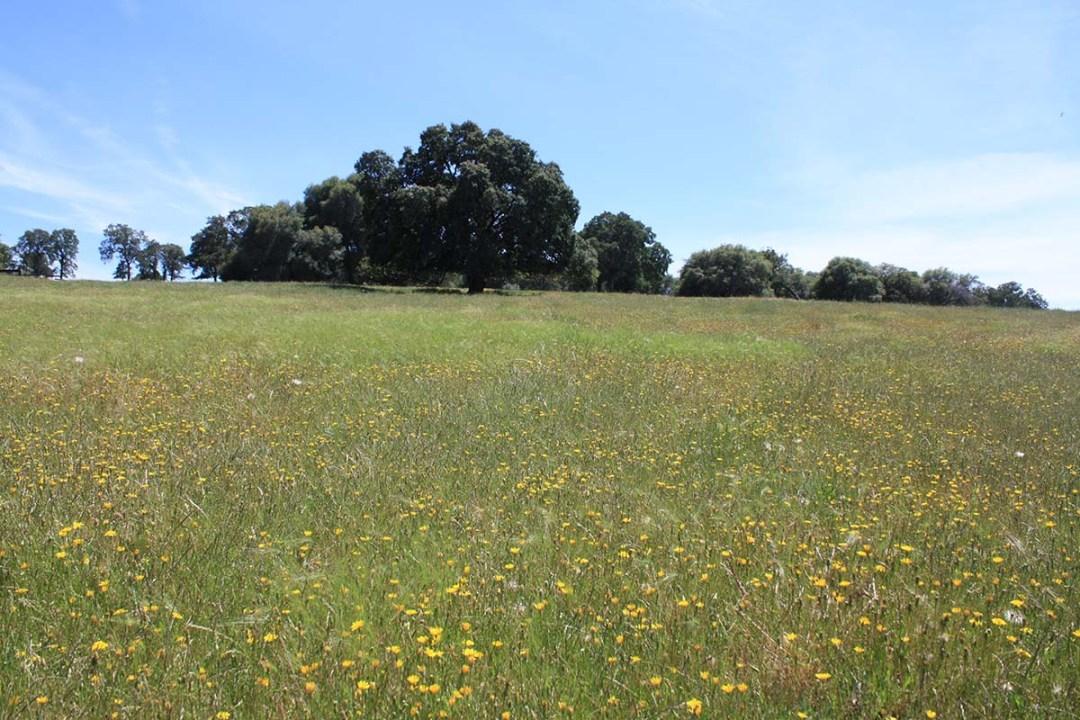 Ranch 9 (4)