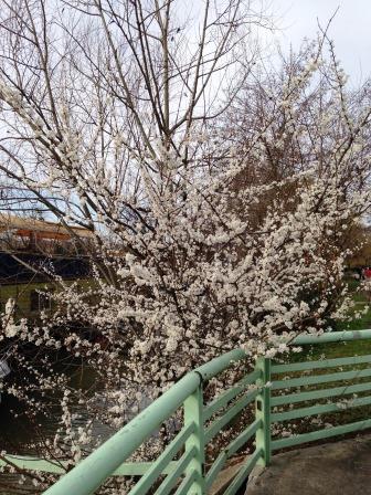 Presque le printemps...