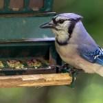 MassWildlife urges public to remove bird feeders and report dead birds 💥😭😭💥