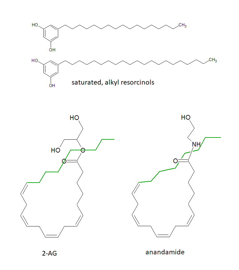 Saturated long chain alkyl resorcinols next to endocannabinoids 2-AG and annandamide
