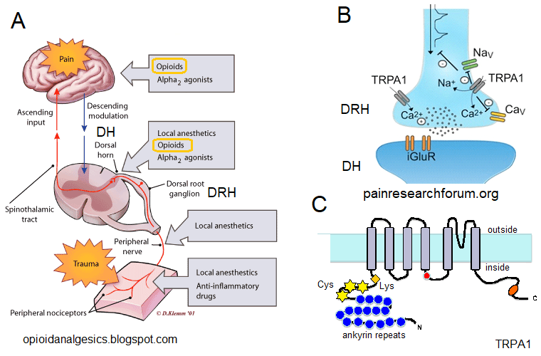 Ss_mechanism