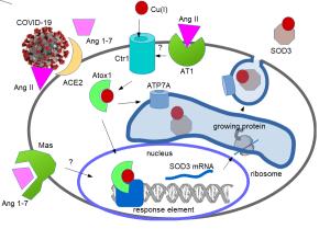 Cu(I) supplements for COD3 supplement, the extracullular superoxide dismutase