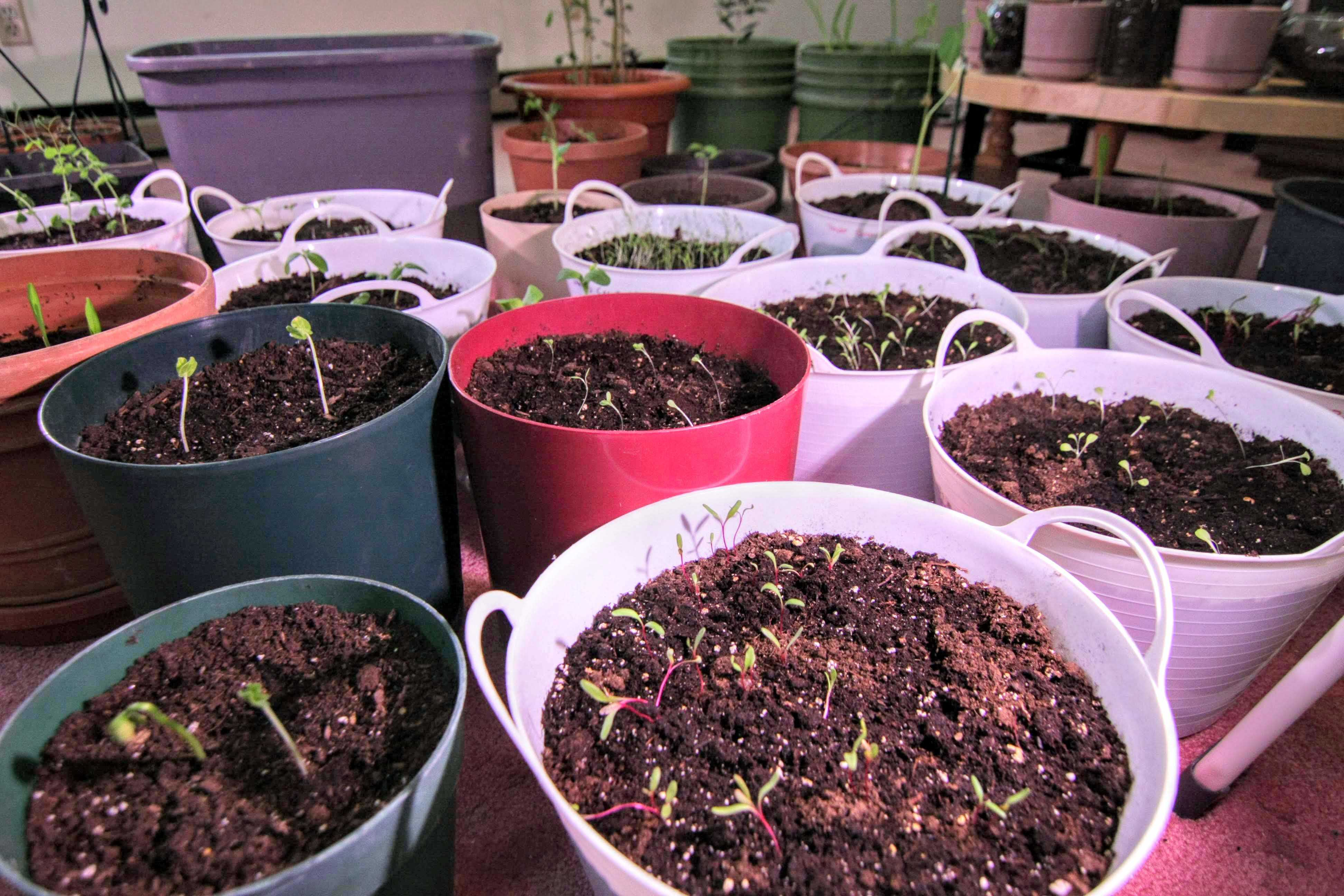 You Can Grow These Plants Quickly During Your Coronavirus Quarantine