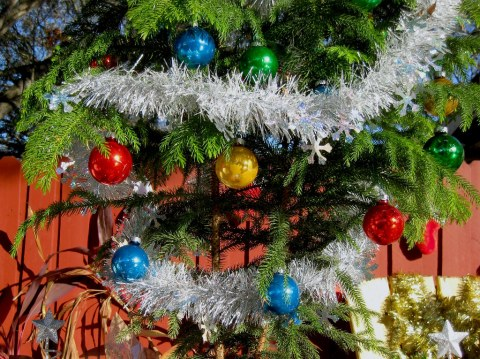Why you might consider an alternative, natural Christmas tree this year
