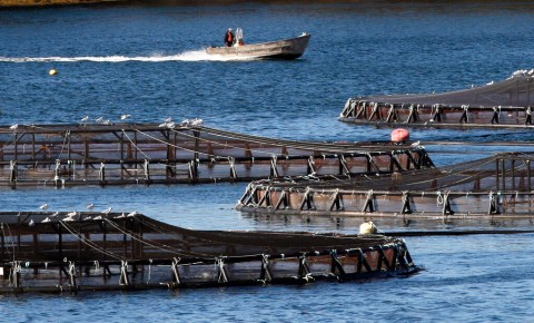 Aquaculture, traditional fishing square off at public hearing on bill to review Maine's lease process