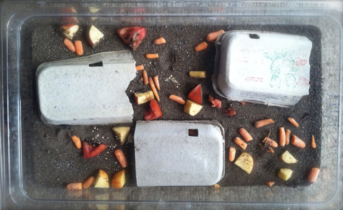 9 Amazing Reasons on Raising Mealworms for Chickens