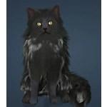[Tier 1] Black Valencian Cat