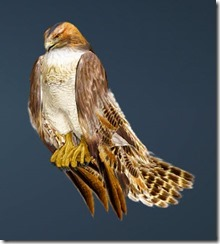 Brown Hawk Guide Front
