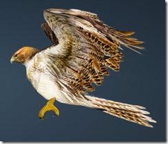 Brown Hawk Guide Side