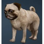 [Tier 1] Calpheon Chubby Dog
