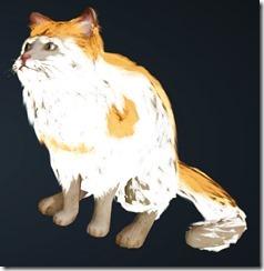 Orange Brindle Cat Front
