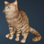 [Tier 1] Striped Cat