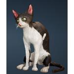 [Tier 1] Tabby Cat