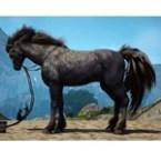 [Tier 6] Horse