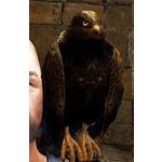 [Tier 3] Hawk Guide