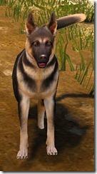 Tier 3 Shepherd Dog 2 Front