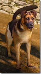 Tier 3 Shepherd Dog Front